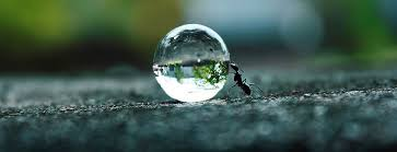Rakesh Rocky ant